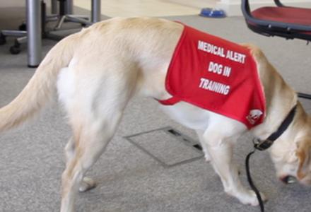 Dog Detectors
